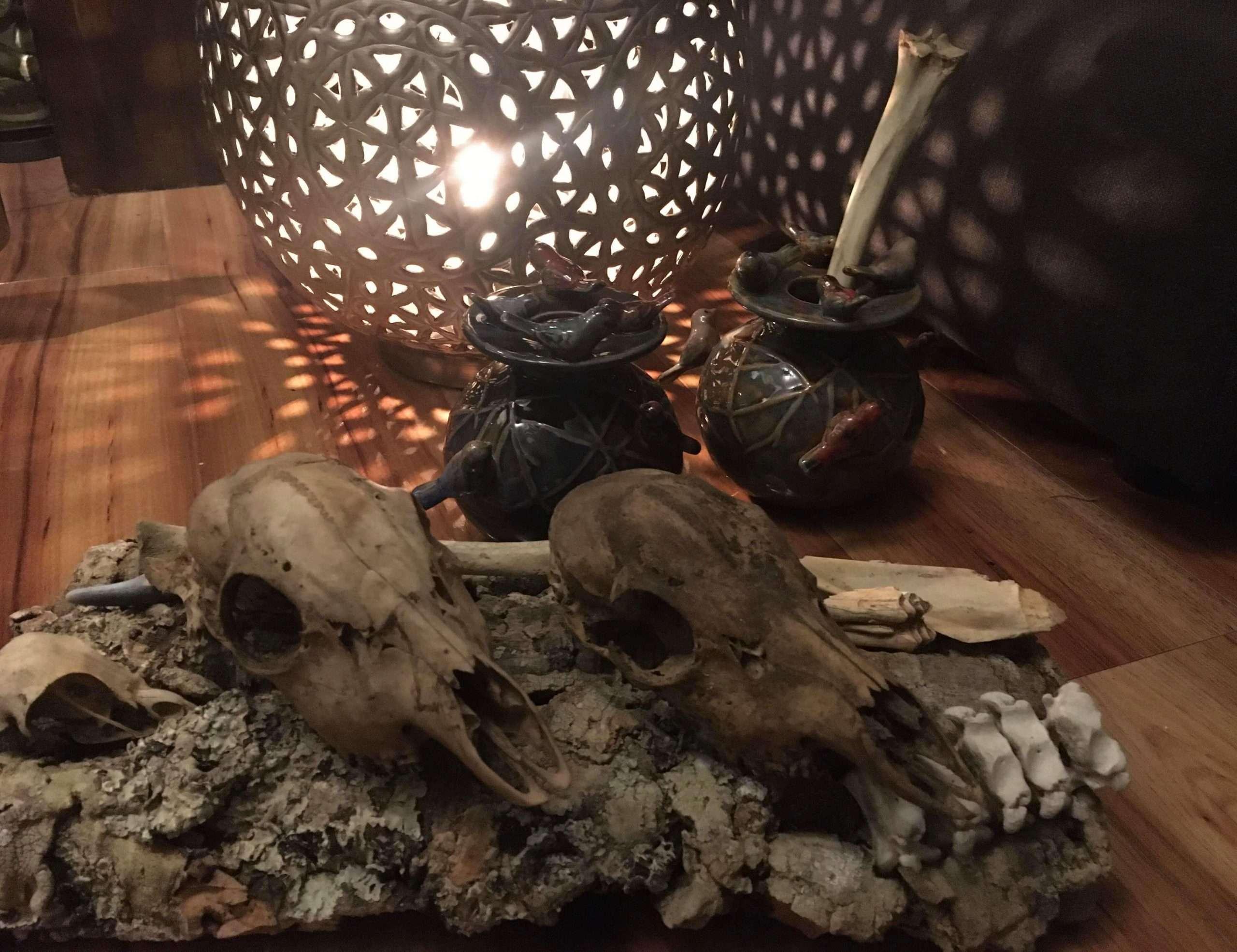 Schedels,dieren,heksen