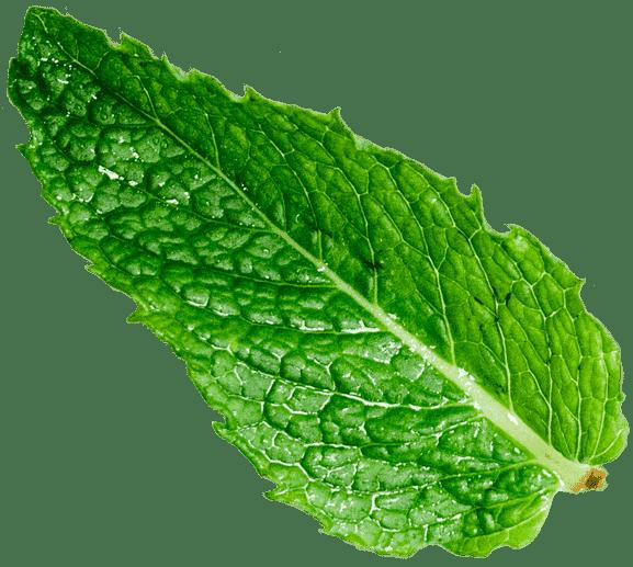 herbal remedy 34