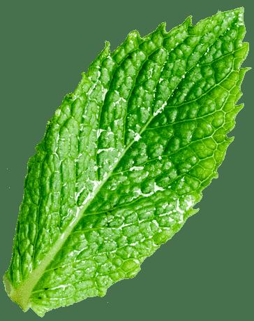 herbal remedy 35
