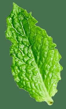 herbal remedy 36 2