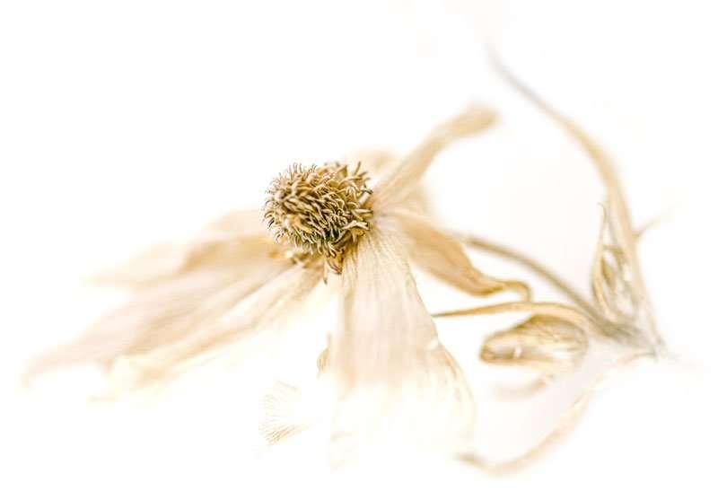 herbal remedy 62 2