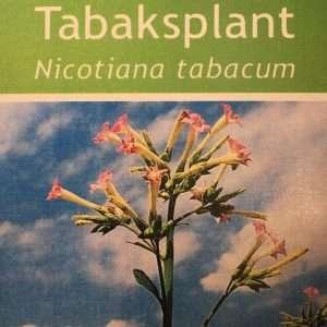 zaden voor tabaksplant